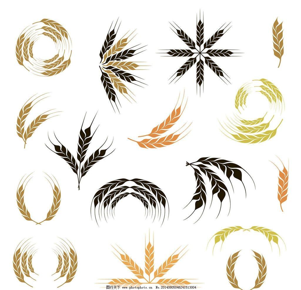 小麦 麦穗图片