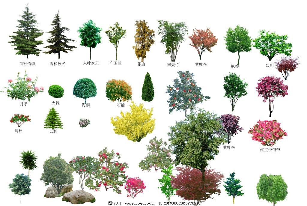 乔木灌木图片