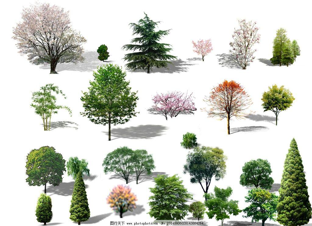 植物素材 乔木 灌木 绿化 造型树 点景树 景观设计 环境设计 设计 72