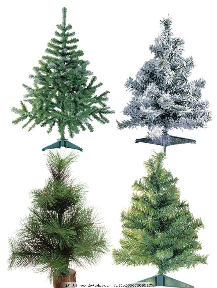 圣诞松树图片