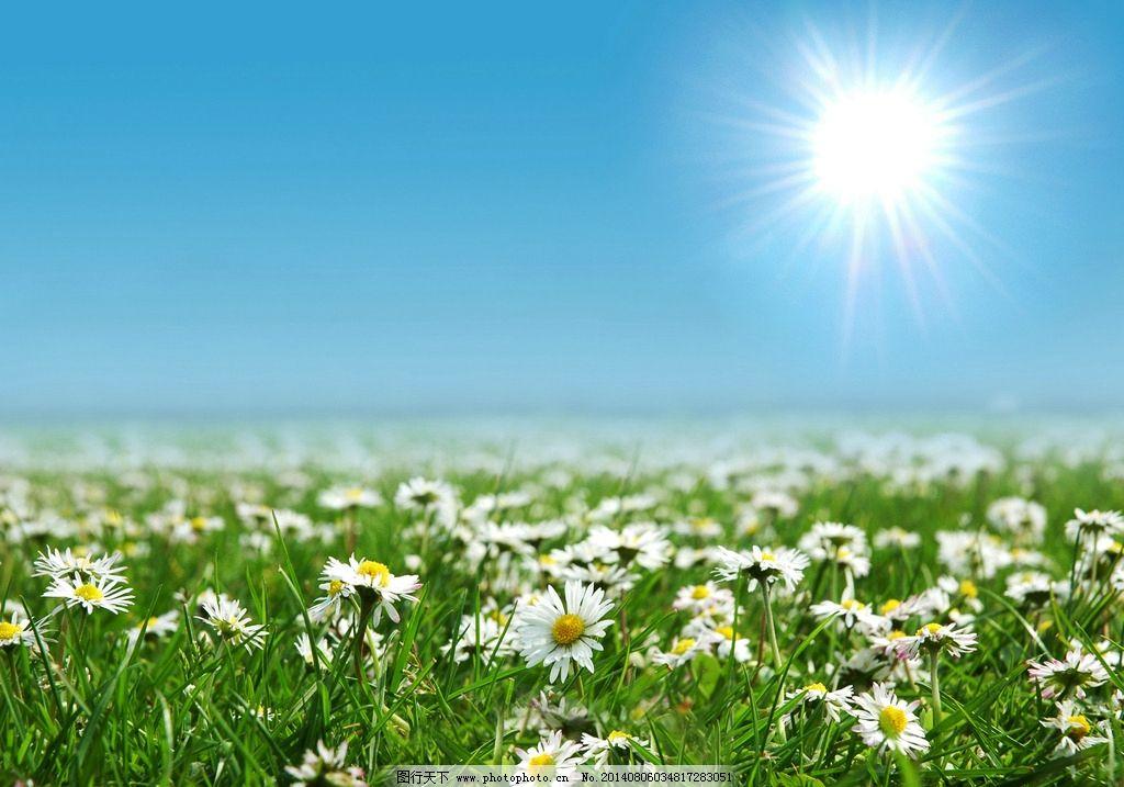 山中野花风景图片
