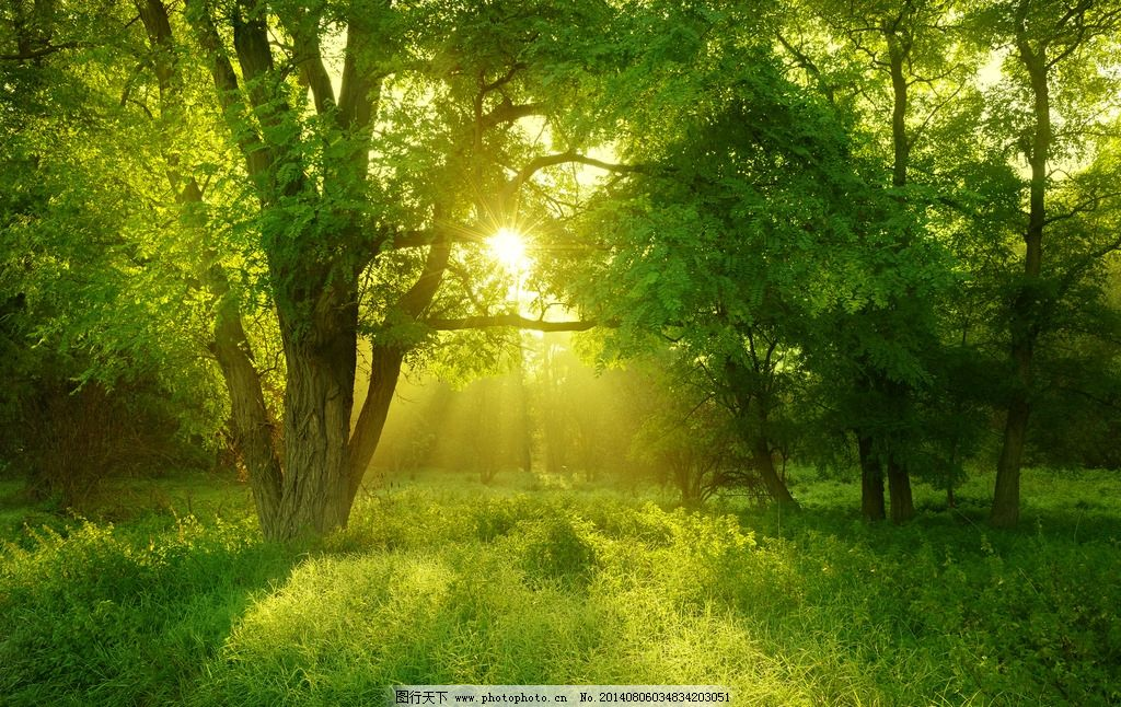 森林 阳光 晨光 绿色 绿化 原始森林 大自然 生态环境 树林 森林公园