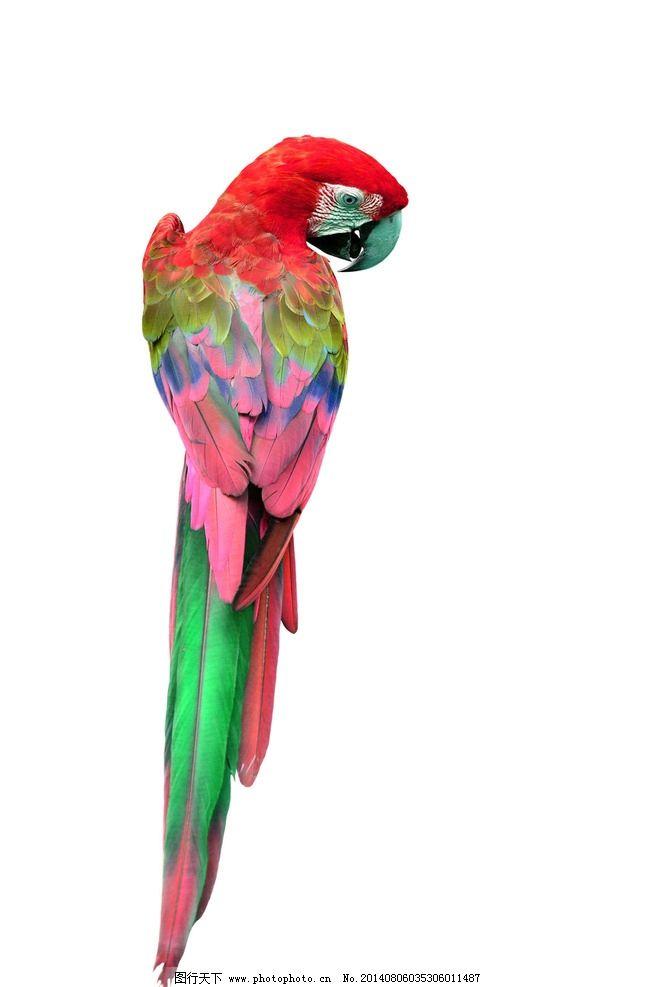 壁纸 动物 鸟 鹦鹉 651_987 竖版 竖屏 手机
