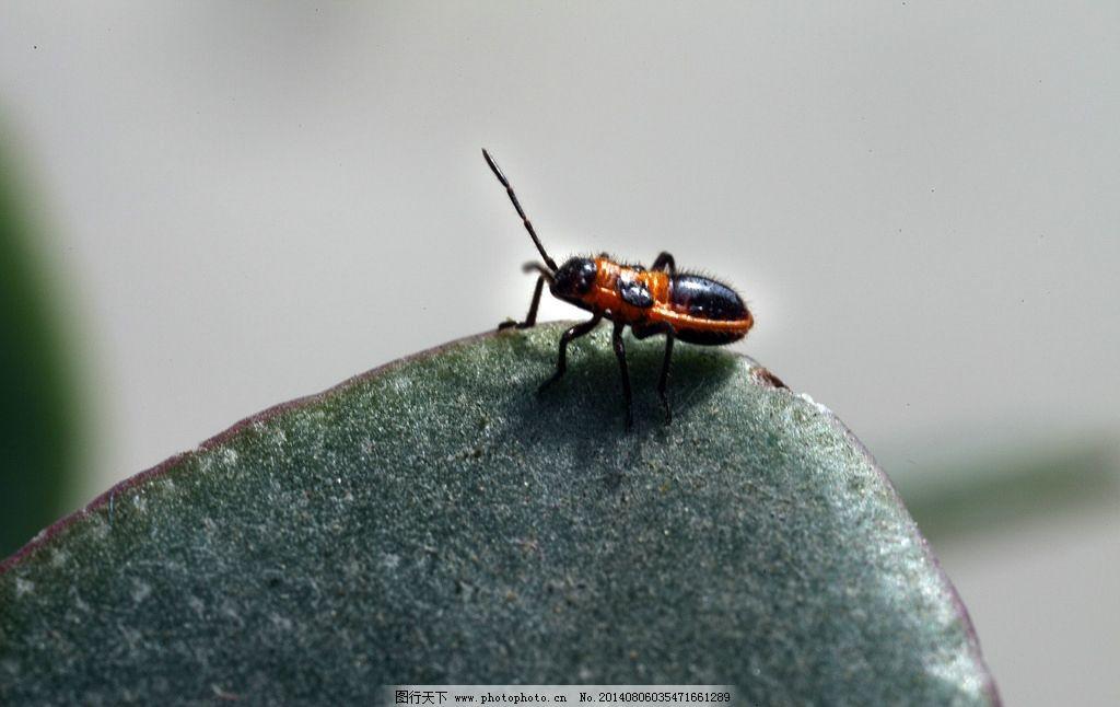 黄花虫 生物 昆虫 动物 节肢动物 生物世界 摄影 350dpi tif