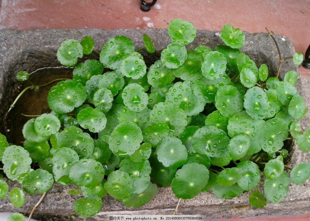 水培植物 温州 水 水培 植物 绿叶 花草 生物世界 摄影 72dpi jpg