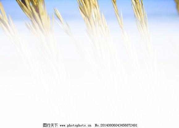ppt 背景 淡雅/淡雅淡色背景PPT模板