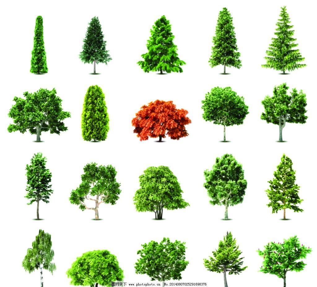 树木 矢量树木 园林 绿叶 绿植 树叶 绿树 环保 手绘树木 自然 树木