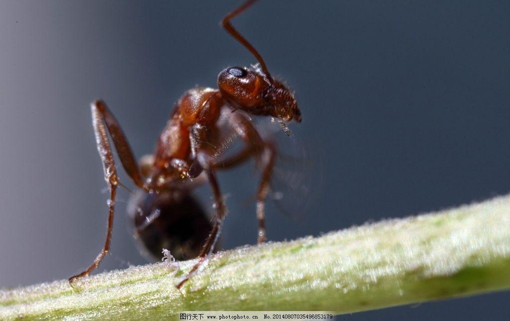 废旧手套手工制作蚂蚁