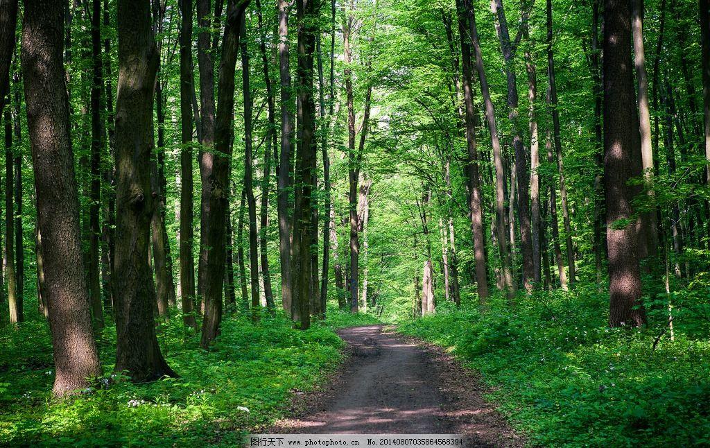 树林 森林 树木 林中小路 土路 树叶 绿叶 春天 夏天 背景图片