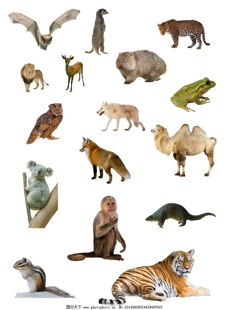 设计图库 生物世界 野生动物    上传: 2014-8-8 大小: 13.