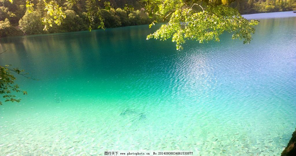 湖面 湖水 九寨沟 树木 树叶 绿叶 鱼群 蓝色 绿色 风景 摄影