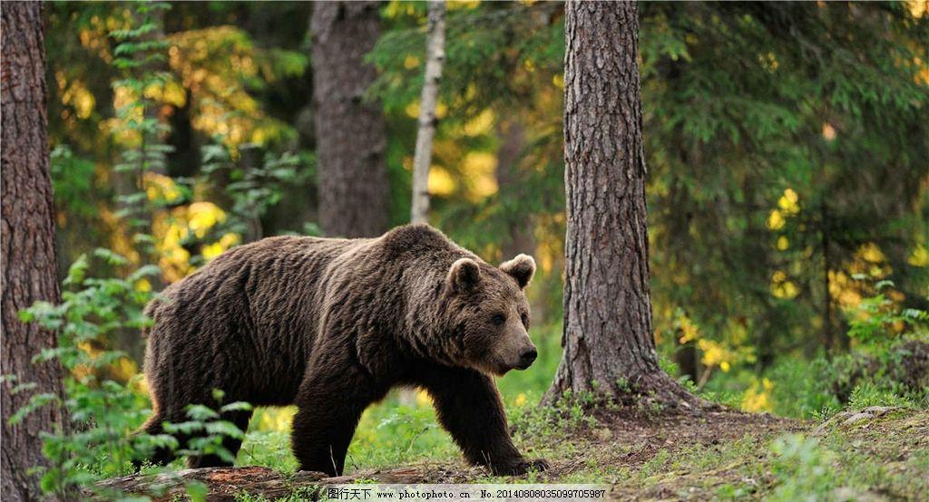 灰熊 熊 棕熊 小熊 保护动物 可爱动物 摄影