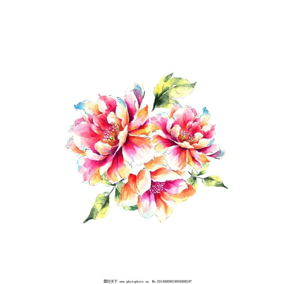 手绘花 花朵 牡丹 芙蓉 花 大花 绘画书法 文化艺术 设计 150dpi jpg