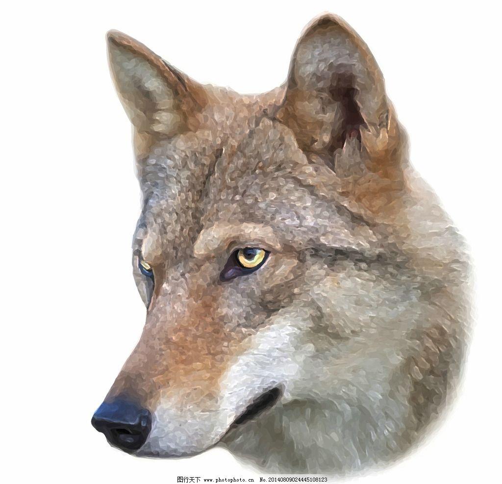 野狼图片_野生动物_生物世界_图行天下图库