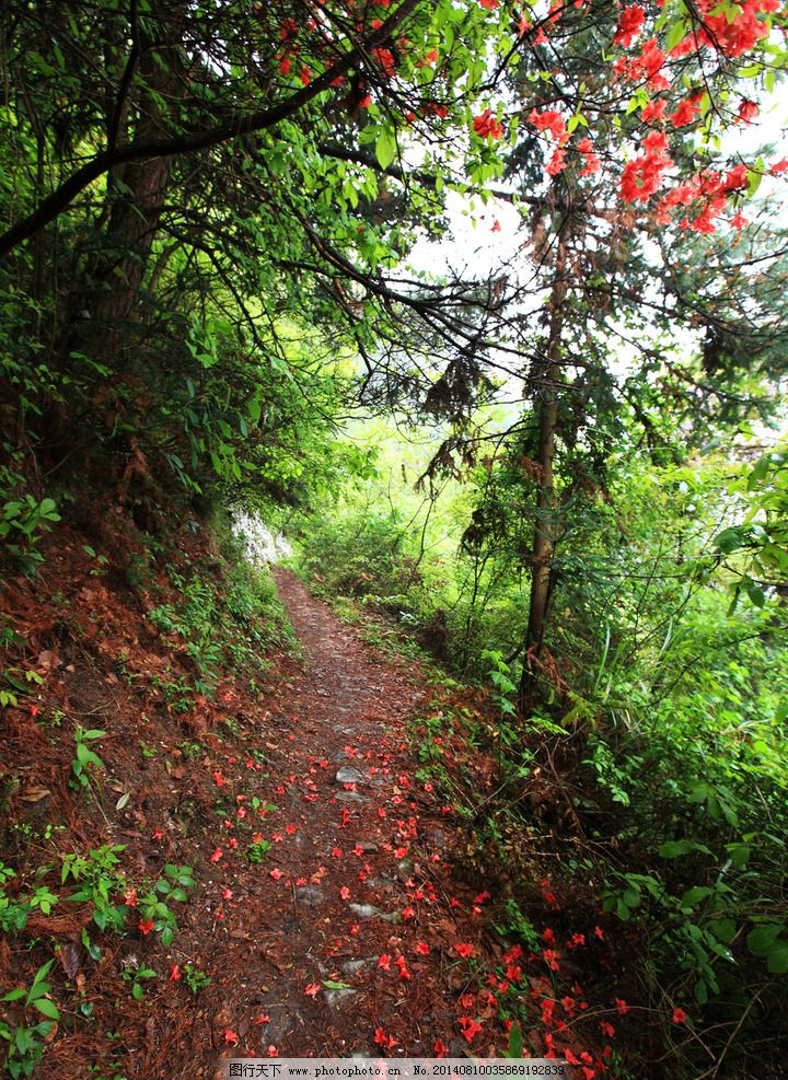 乡村泥路 树叶 树枝 树影 树 乡村 小草 沙树 花花世界 摄影 秋景