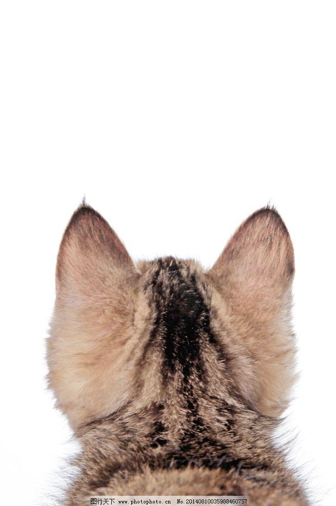 喵的背影 萌宠 喵星人 猫咪 宠物 背影 家禽家畜 生物世界 摄影 99dpi