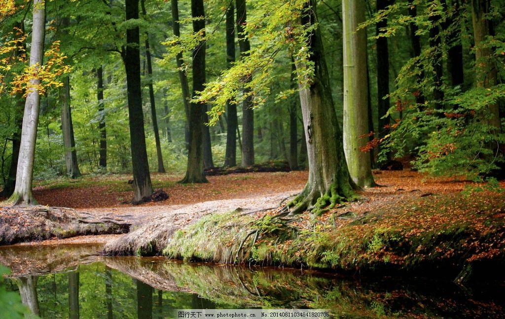树林小溪摄影 森林 树林 小溪 摄影 秋天 落叶 流水 倒影 自然风景