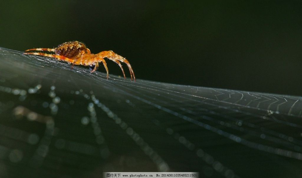 昆虫纲 节肢动物门