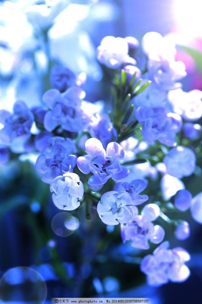 唯美丁香花 秦皇岛 北戴河 公园 奥林匹克公园 植物 自然 风景