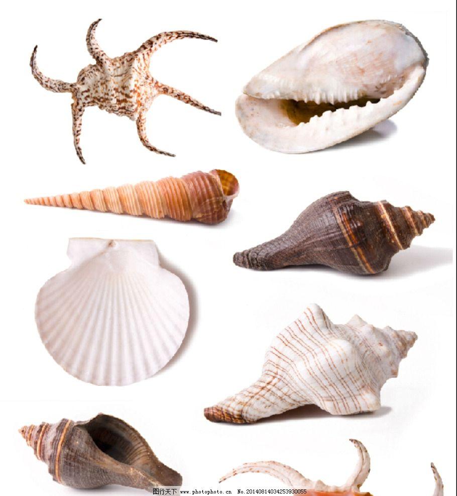 贝壳 单个 大图 海螺 海星 海洋生物 生物世界