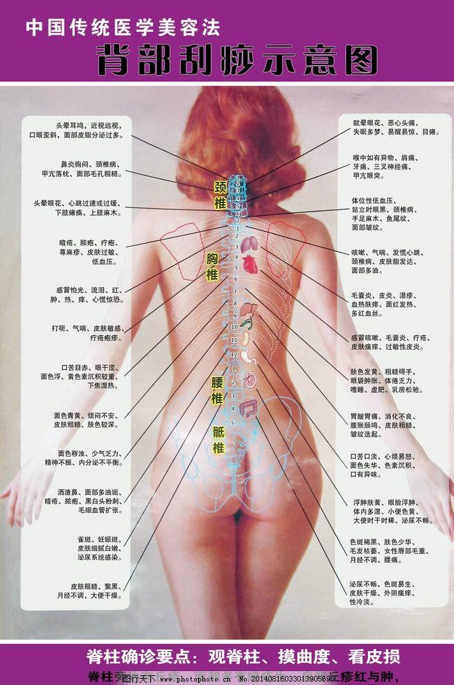 背部刮痧示意图 背部刮痧