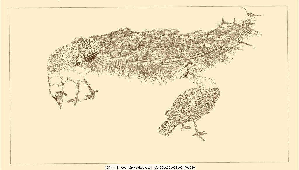 禽鸟白描免费下载 白描 动物 国画 孔雀 线描 中国画 禽鸟 动物 小