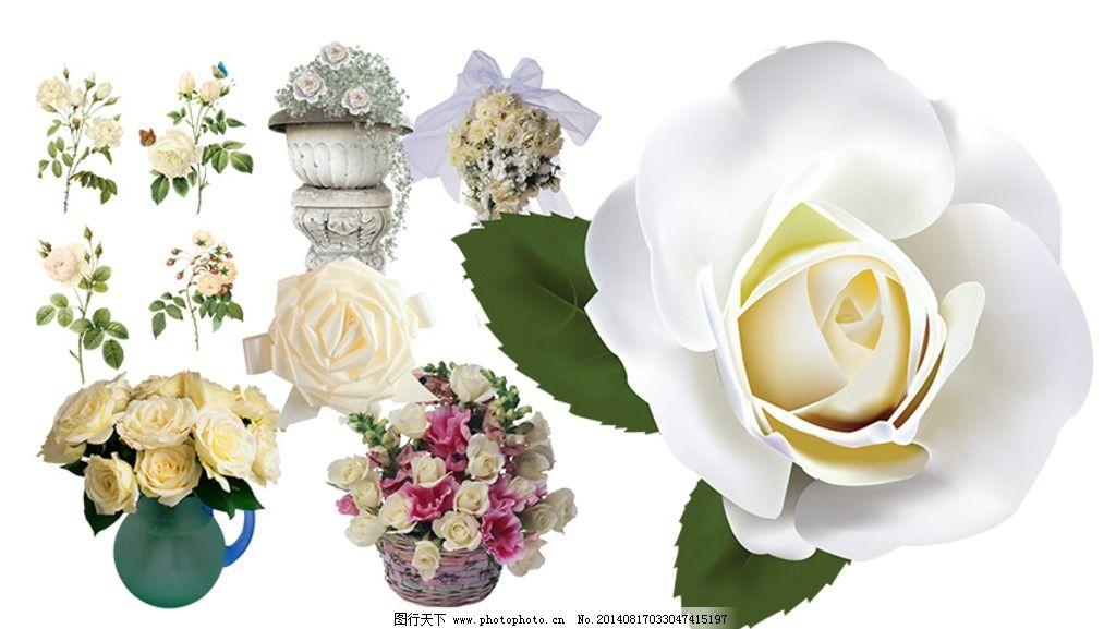 白玫瑰素材 玫瑰花素材 花束 花球 手绘玫瑰花 编织玫瑰花 花瓶