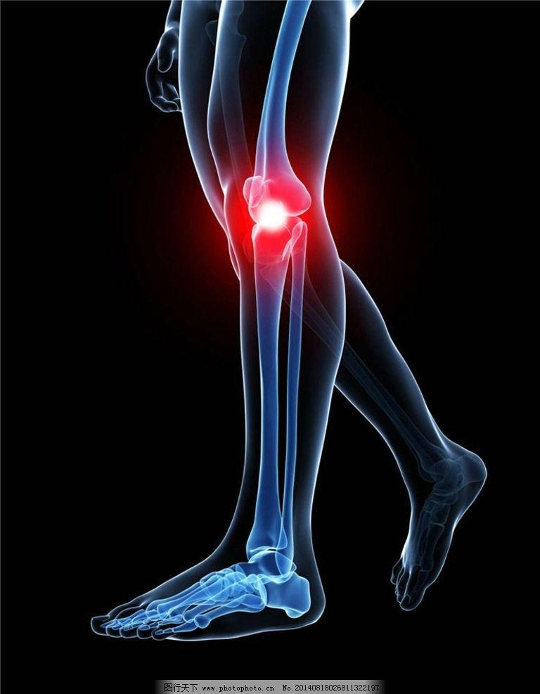 膝盖 人体器官 人体组织 人体结构 医学 医疗 科学