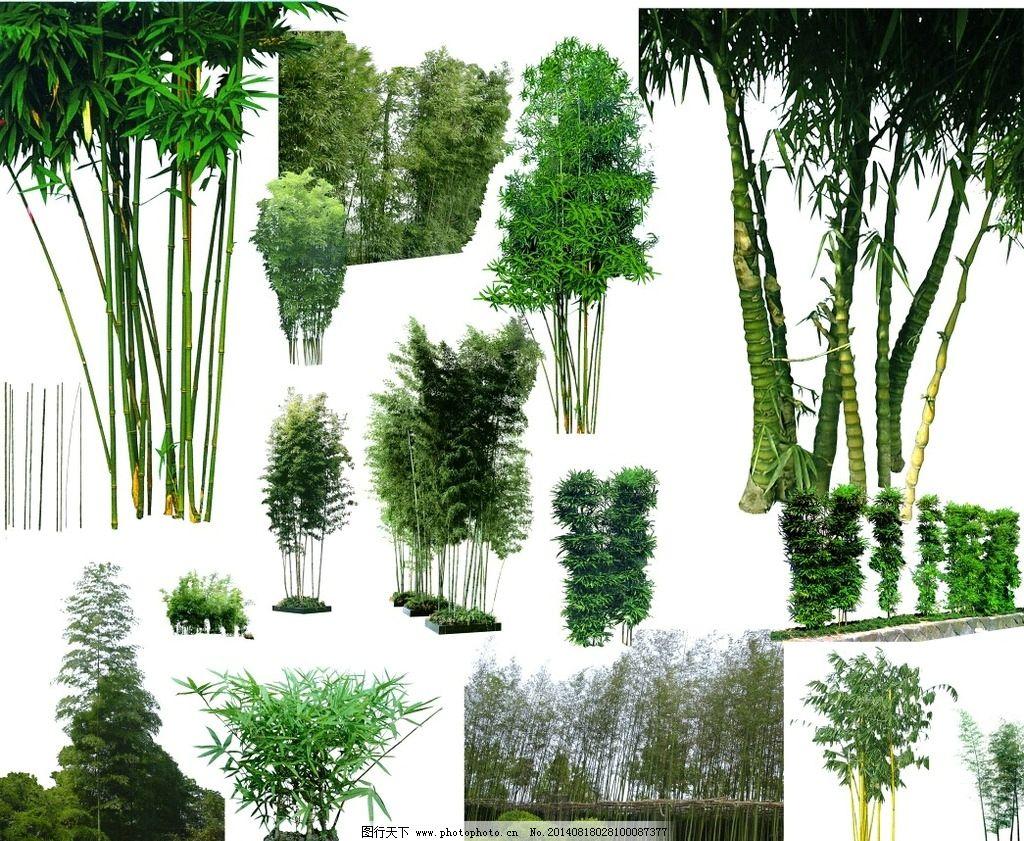 psd 竹子        建筑 景观 园林 效果图psd 分层素材 景观设计 环境