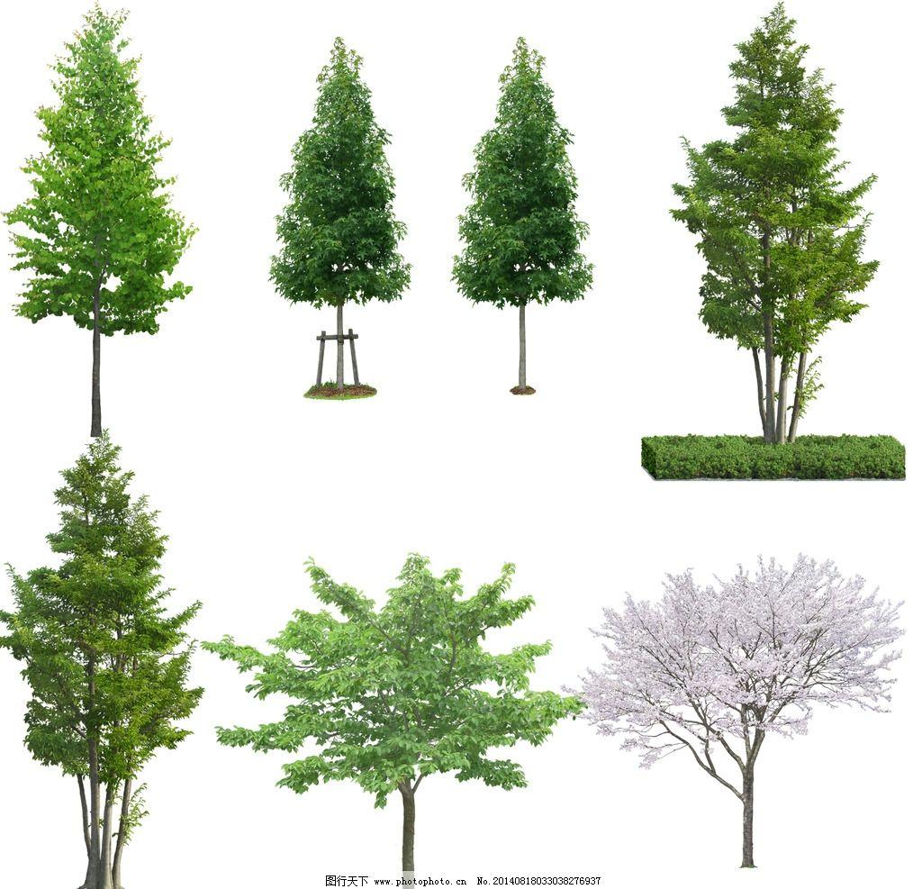 大树 树木 景观树 psd图片