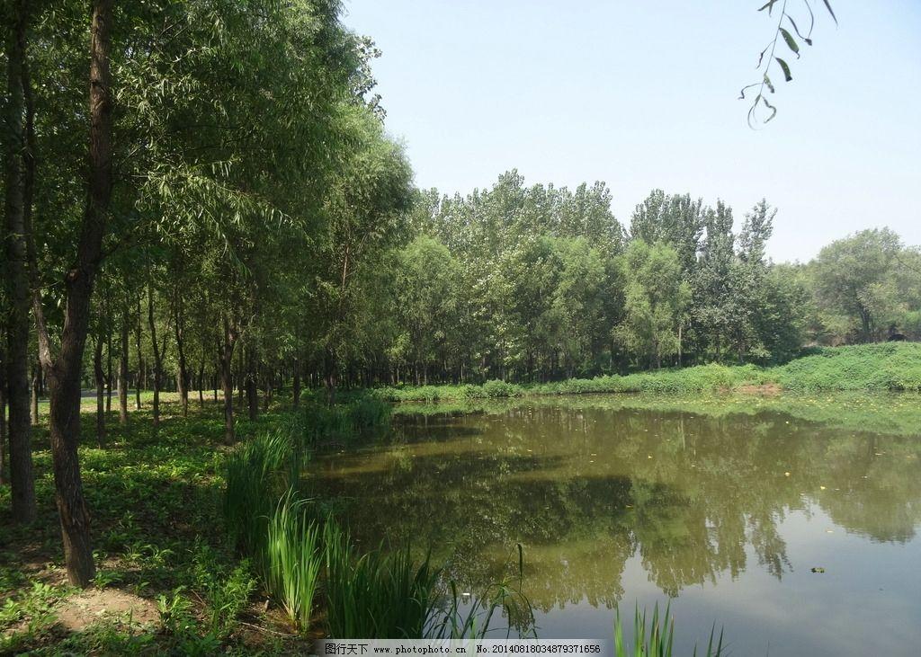 湿地美景 蓝天 树木 环绕 倒影 河流 小草 杨树 湿地晴天美景 自然