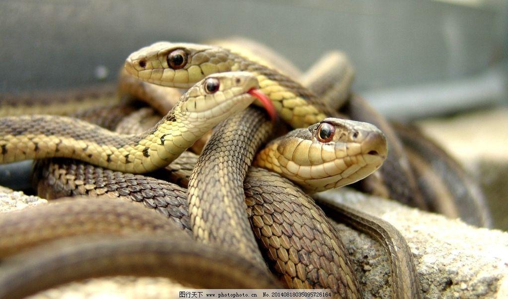 殡仪用品扎纸蛇的图片