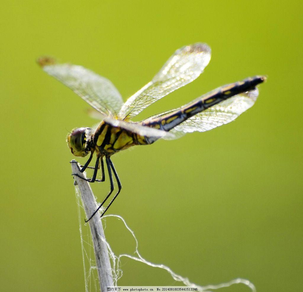 螳螂是害虫还是益虫_还有哪些昆虫是益虫-那些昆虫是益虫/甲虫是益虫还是害虫/蝴蝶 ...