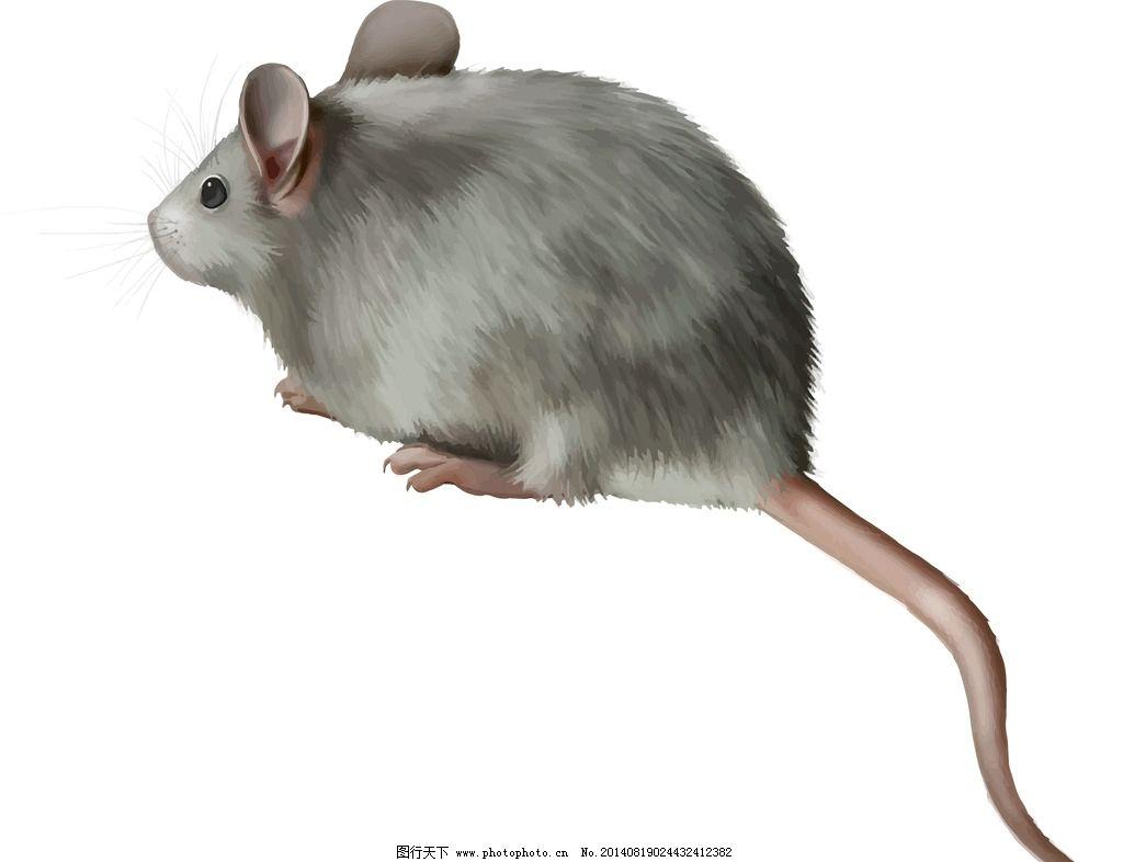 老鼠 手绘动物 保护动物 野生动物 生物世界 设计 eps
