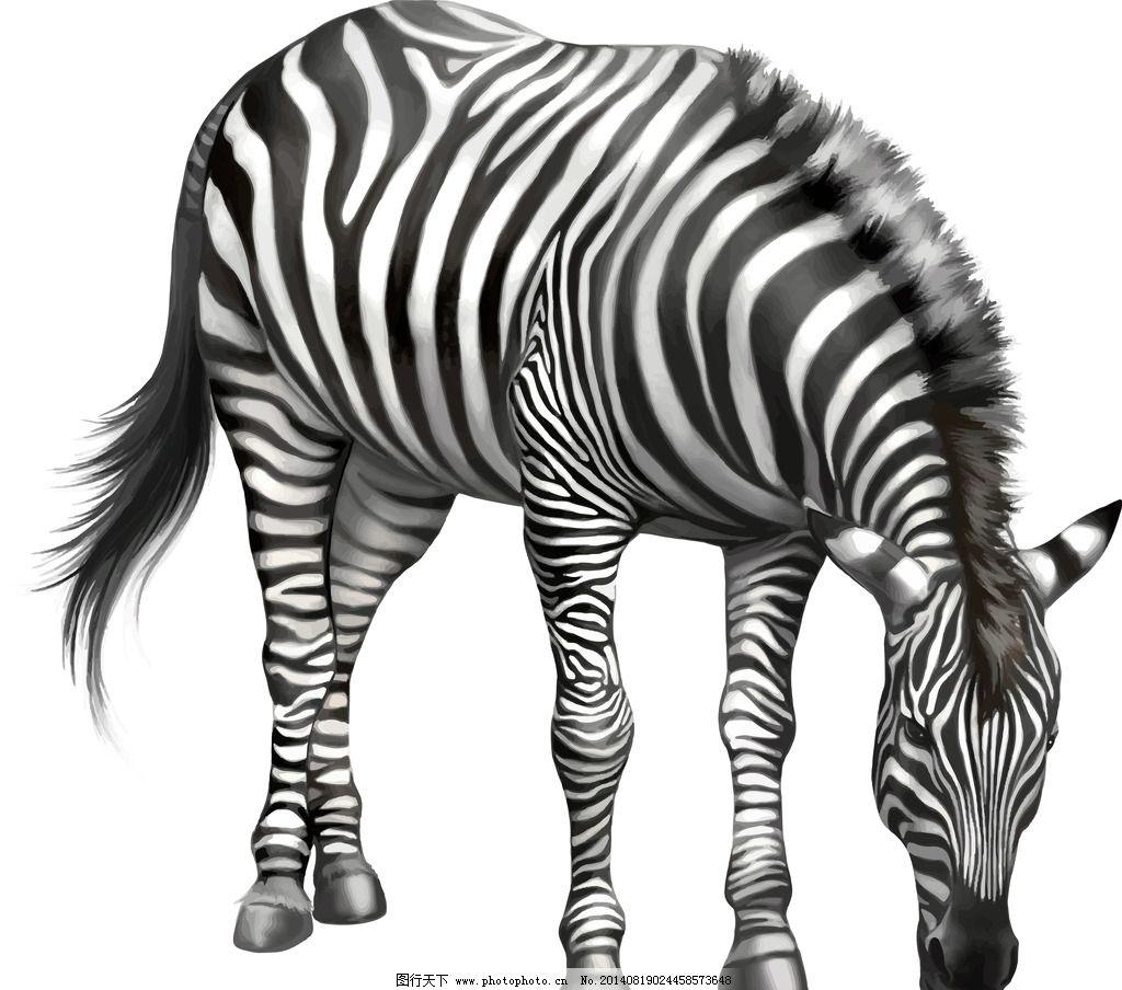 斑马 手绘动物 保护动物