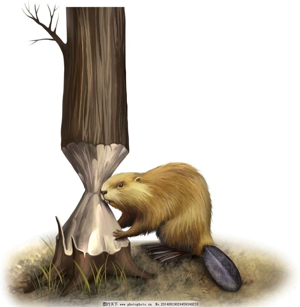 硕鼠 手绘动物 保护动物 野生动物 生物世界 设计 eps
