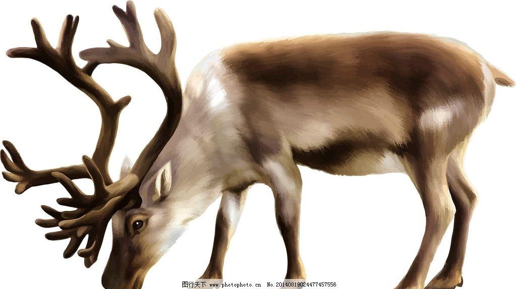 驯鹿野生动物 保护动物 可爱动物