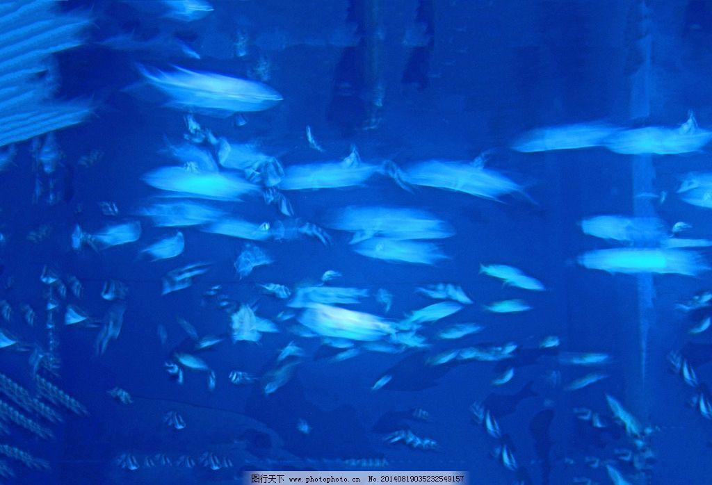 水中舞蹈 海洋生物 海洋 生物 动物 鱼 鱼群 鱼类 生物世界 摄影 350