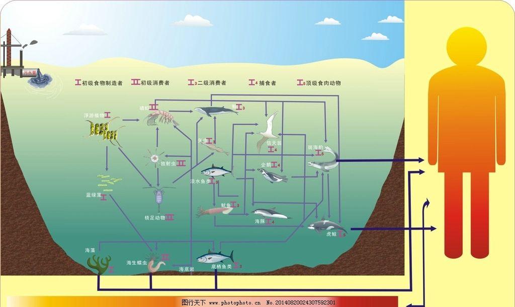 海洋食物链图片
