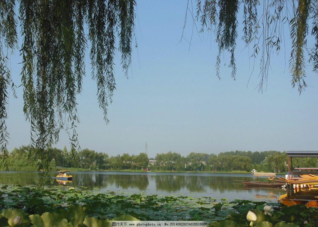 公园 风景图 垂柳 湖面 荷塘 蓝天 树木 自然风景 自然景观 摄影 300