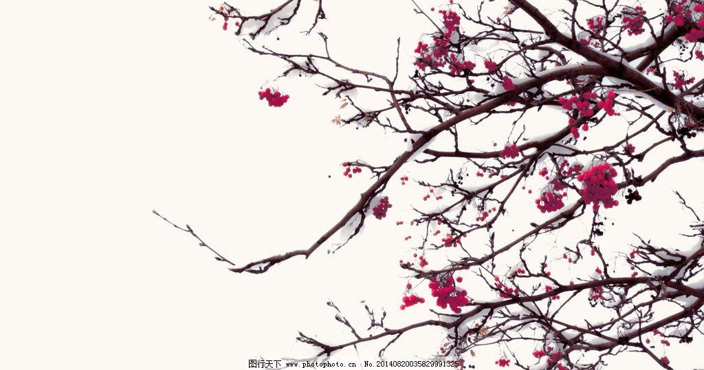 枝头 下雪 梅 中国风 国画 雪压枝头 桌面背景 积雪 枝干 树干 果树