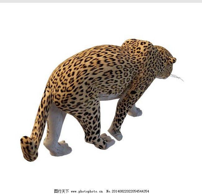 爬行动物 四足动物 哺乳类