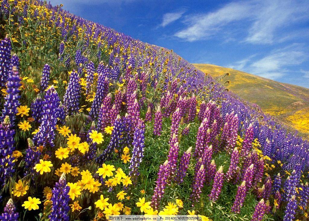 唯美花海 秦皇岛 北戴河 风景 风光 自然 植物 旅游 摄影 唯美 清新