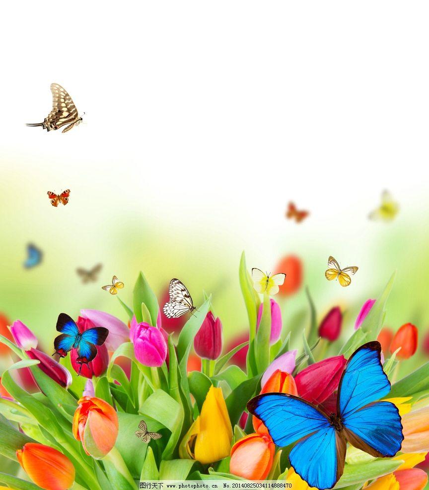 蝴蝶 郁金香 春天 花丛 鲜花 生机勃勃 灿烂 盛开 花草 生物世界图片