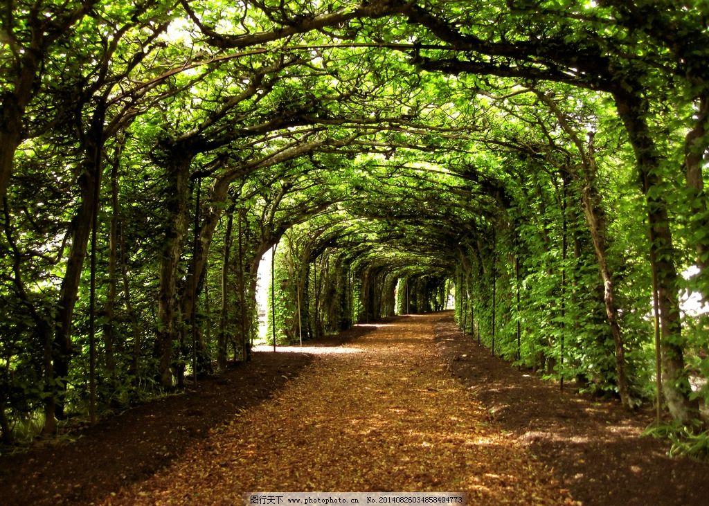 景观手绘树木林