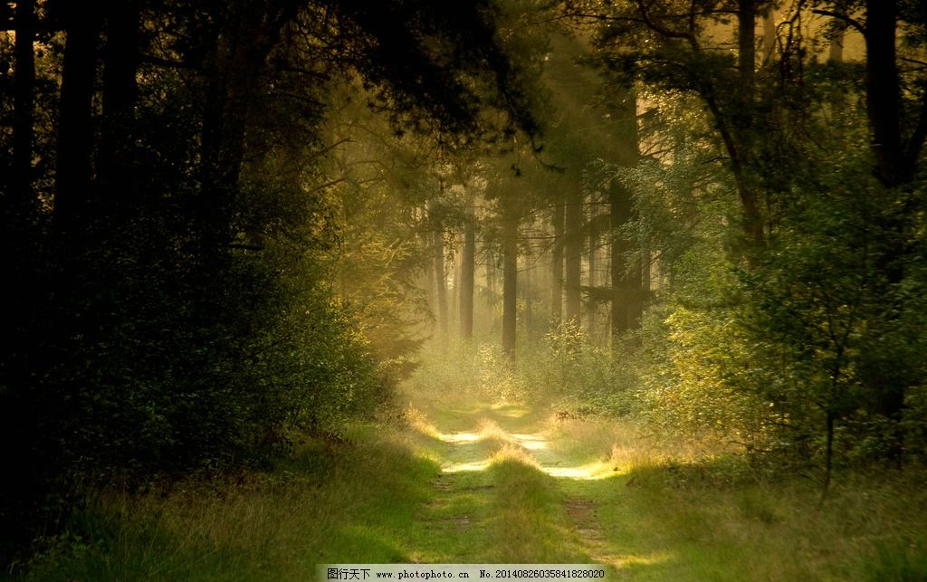 阳光透过树林 阳光透过森林 初升的太阳 丛林森出 林中小道 树木树叶