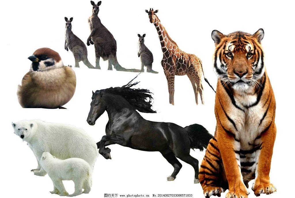 动物集合 老虎 马 北极熊