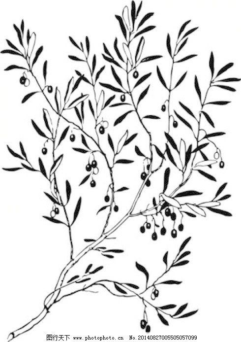 橄榄枝简笔画