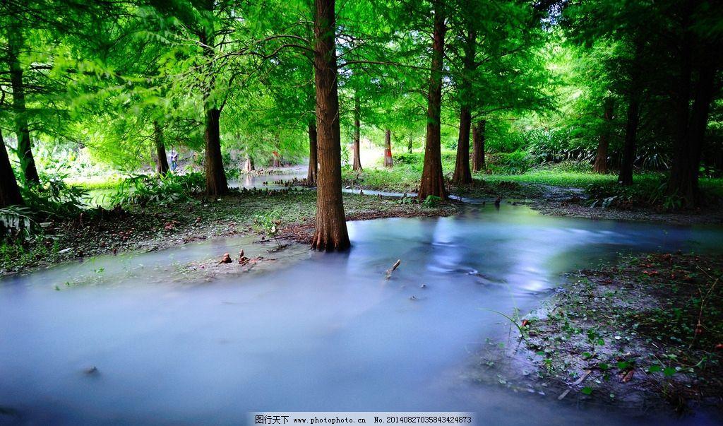 雨后森林图片