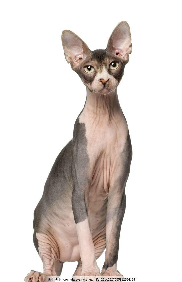 小猫图片,猫咪 宠物 可爱动物 小猫咪 摄影-图行天下